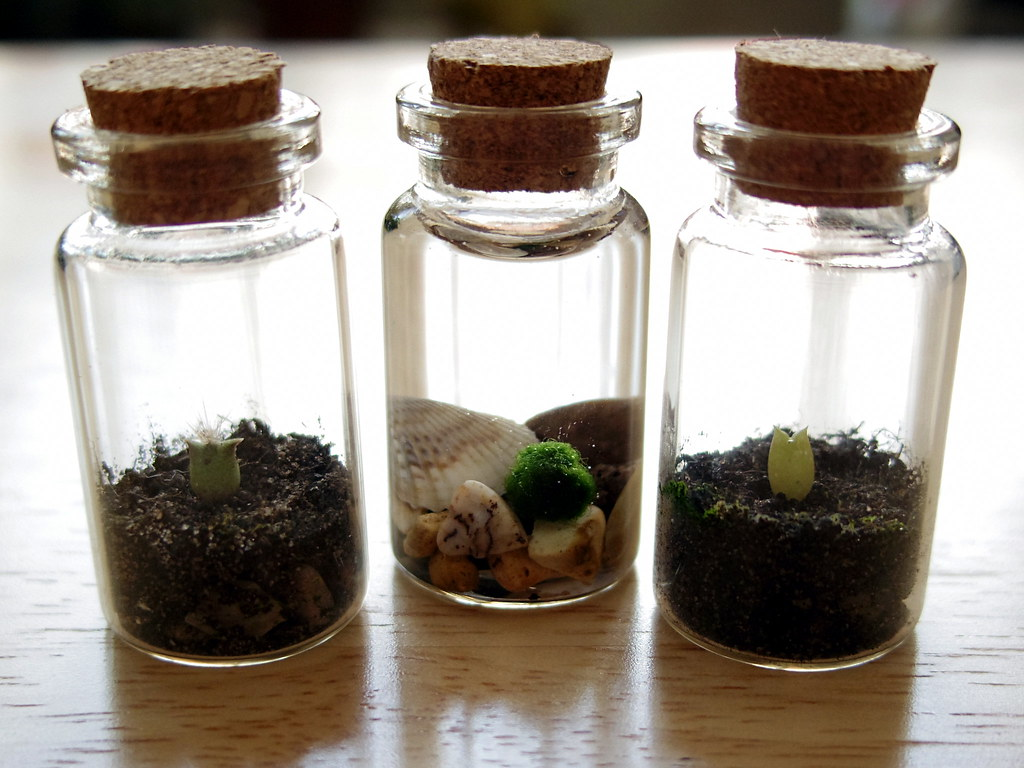 The Difference Between Terrariums in Singapore and Around The World